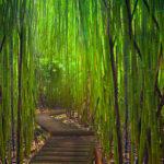 104106 Sti med bambus