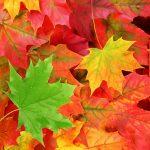 105102 Efterårets blade