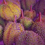 108105 Exotiske frugter