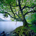104132 Træ ved sø