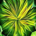105121 Grøn blomsterknop