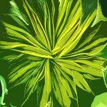 105122 Grøn blomsterknop