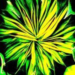 105123 Grøn blomsterknop
